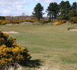 Beautiful Scottish flora dots along the landscape of the Medal Course at Monifieth Golf Links.