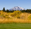 Tetherow's artistic contrasts: Mount Bachelor's snowy peak, emerald green fairway grass and gold colors of wild rubber rabbitbrush.