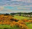 "The 11th hole on the Old Course at Royal Troon Golf Club, called ""The Railway,"" looks spectacular when the gorse blooms."