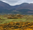 Gorse blooms on the par-3 fourth hole at the Royal County Down Golf Club.