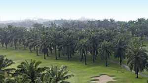 Saujana GCC - Palm