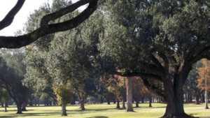 Southern Oaks GC