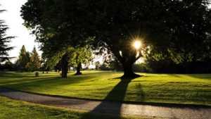 Green Tree GC