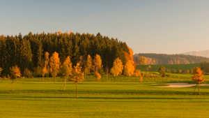 Waldkirch GC