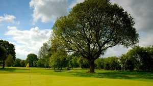 Langer tree at Fulford Golf Club