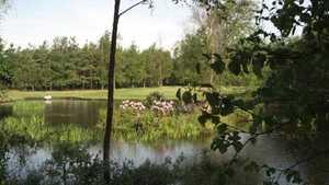 Breinholtgaard GC - Skoven: #7