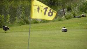 Holsted GC: #18