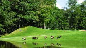 Club de Golf de Plessisville: #14