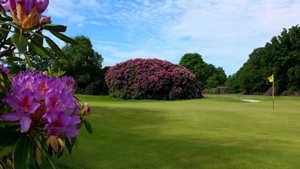 Dorset GCC - Woodland: #7