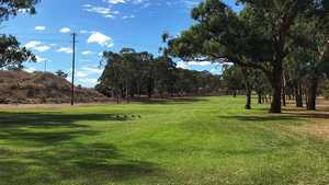 Muswellbrook GC