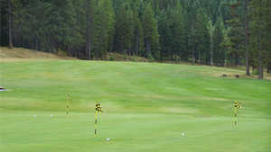 Sparwood GC: putting green
