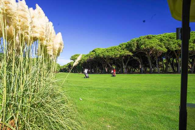old course golf old course in mandelieu la napoule alpes maritimes france golf advisor. Black Bedroom Furniture Sets. Home Design Ideas