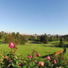 A view of a tee with roses in foreground at Bel-Air Country Club.