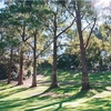 A sunny view of a hole at Hurstville Golf Course