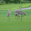 Harmony Golf Preserve: Wildlife
