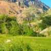 A view of a green at Cedar Hills Golf Club