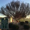 A view from Arcade Creek at Haggin Oaks Golf Course