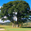 A view of a green at Mountain Ash Golf Club