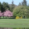 A view of a hole surrounded by water and spring blossomed trees at Centre Hills Country Club