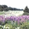 A view of the 7th fairway at Springbrook Golf Club