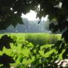 A view from Zeewolde Golf Club