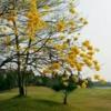 A view of a fairway at Nan Pao Golf Club.