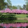 A view of a hole guarded by spring blossom trees at Baltimore Country Club.