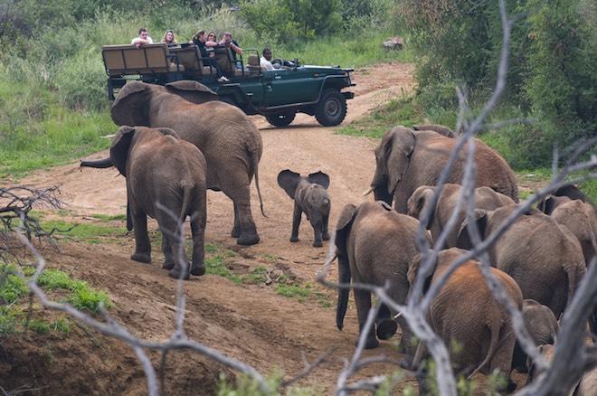 161101-elephants