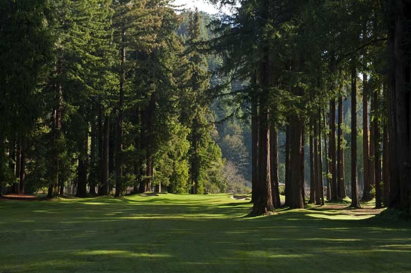 Northwood Golf Club's redwood-lined corridors are majestic. (Northwood Golf Club)