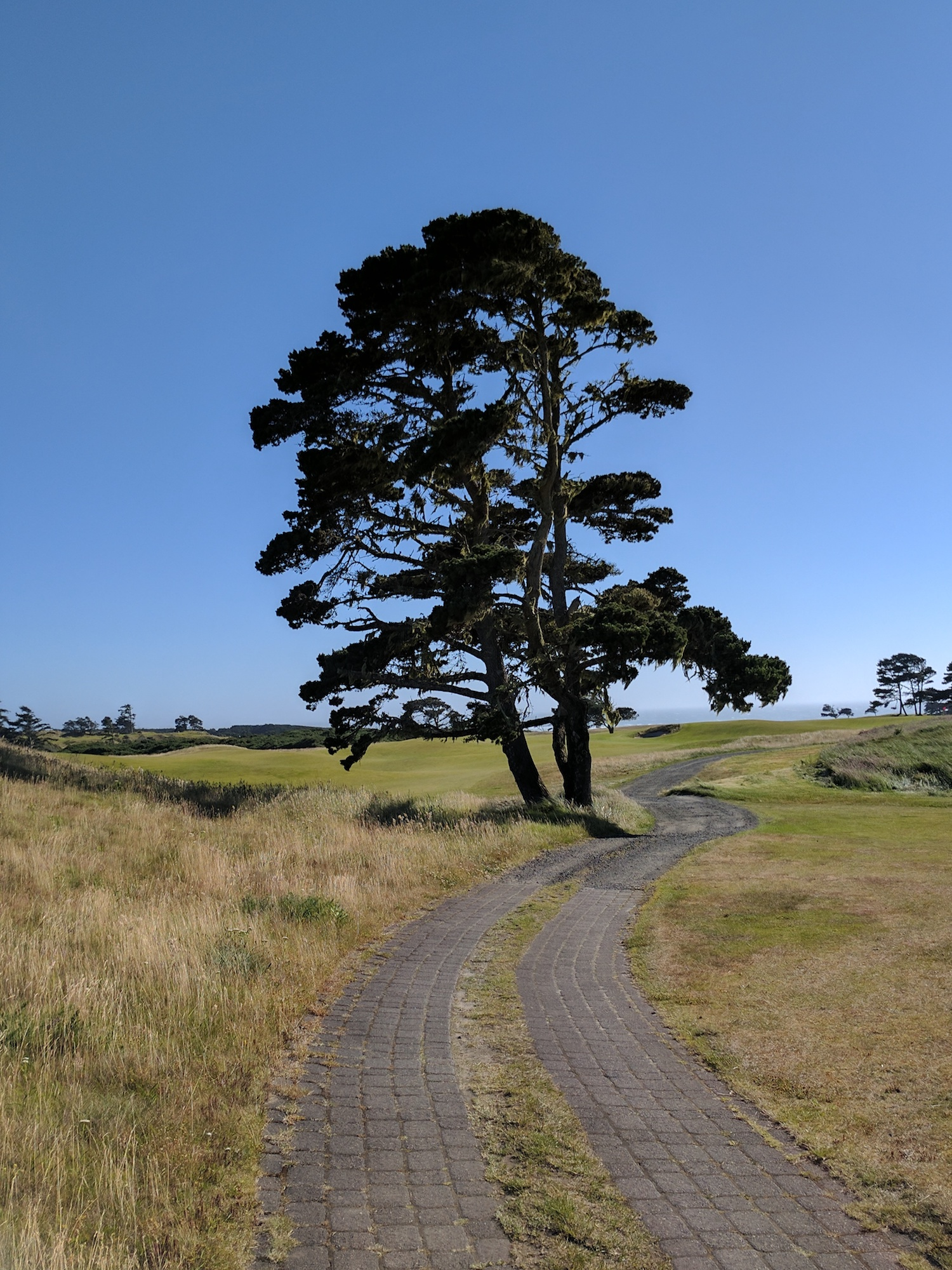 What little man-made materials there are are presented in harmony and scale with the site and environment. This path is a perfect example: ideal either for a pushcart or two golfers or caddies walking abreast.
